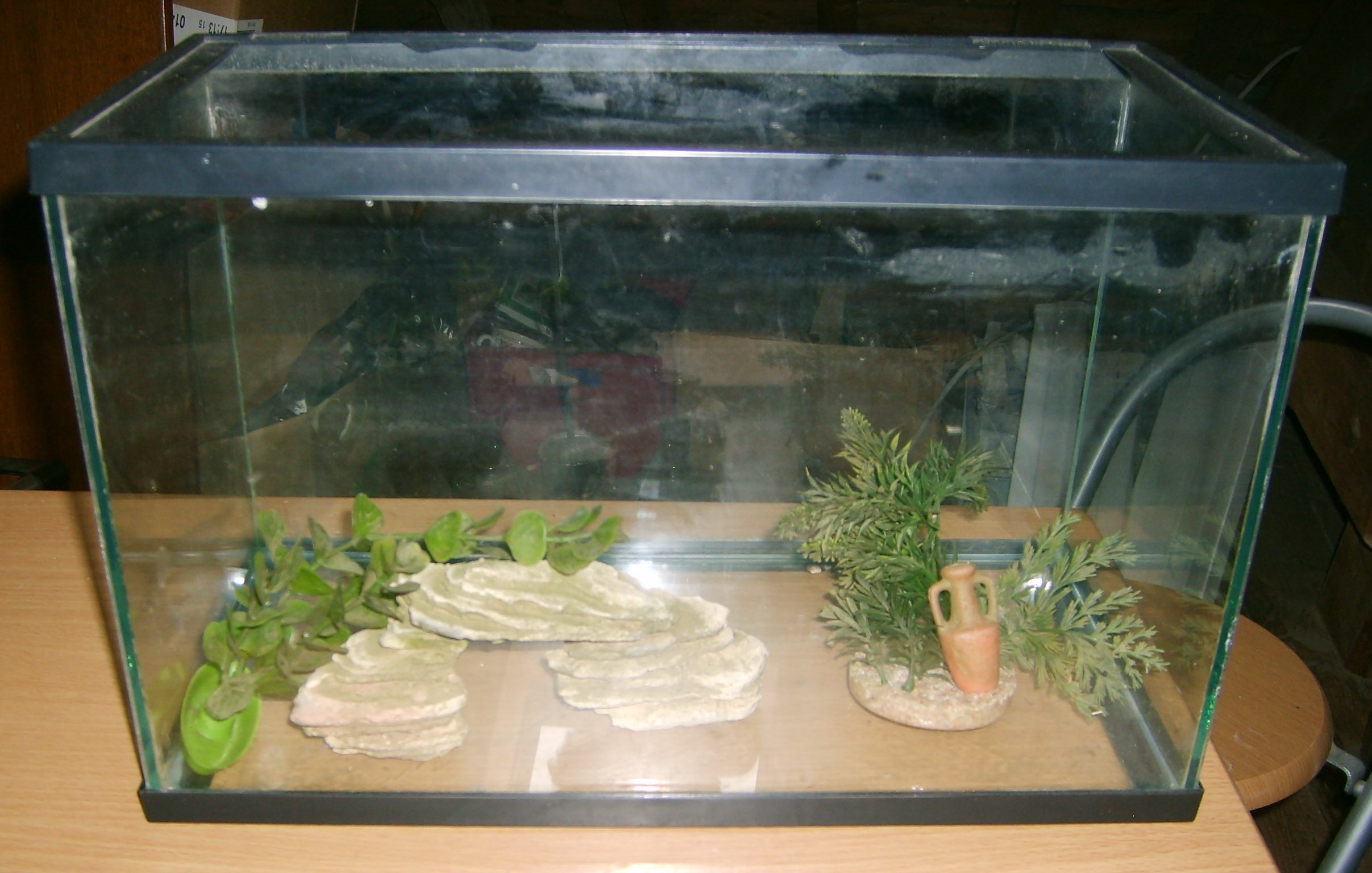Aquarium at monpetitbazaramoi for Prix poisson rouge exterieur